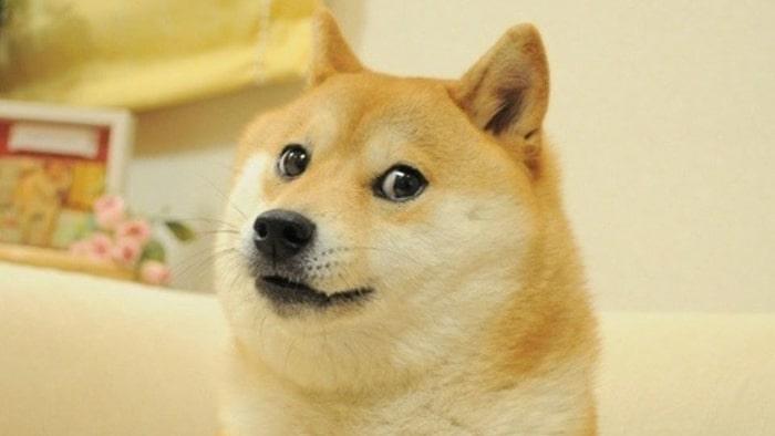 Dogecoin koers verwachting